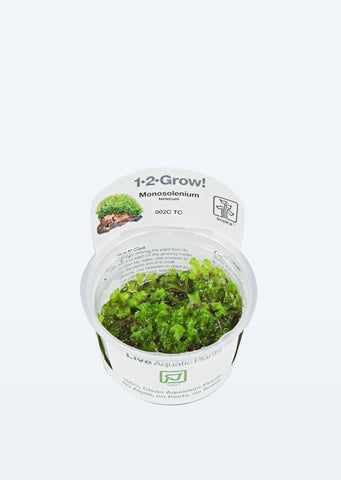 1-2-Grow! Monosolenium tenerum