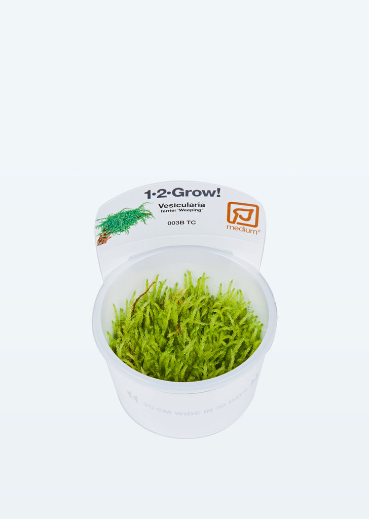 1-2-Grow! Vesicularia ferriei 'Weeping' plant from Tropica products online in Dubai and Abu Dhabi UAE