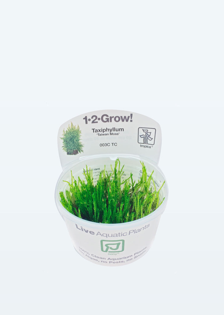 1-2-Grow! Taxiphyllum 'Taiwan moss' plant from Tropica products online in Dubai and Abu Dhabi UAE