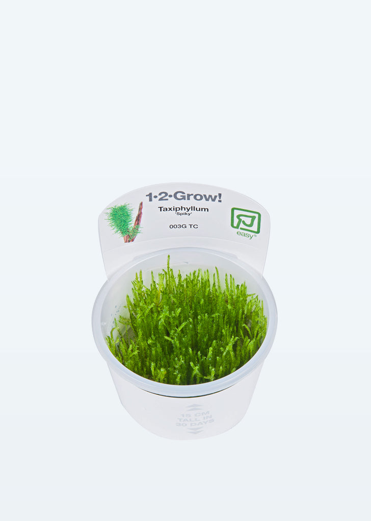 1-2-Grow! Taxiphyllum 'Spiky' plant from Tropica products online in Dubai and Abu Dhabi UAE