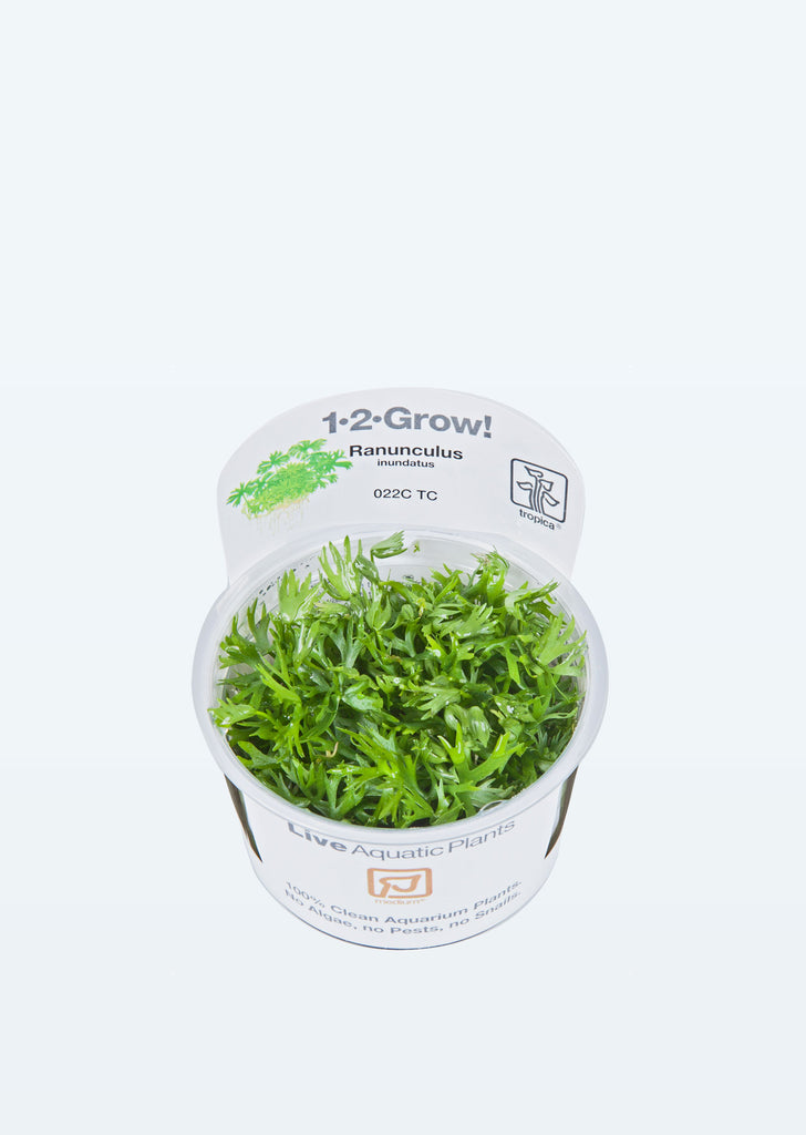 1-2-Grow! Ranunculus inundatus plant from Tropica products online in Dubai and Abu Dhabi UAE