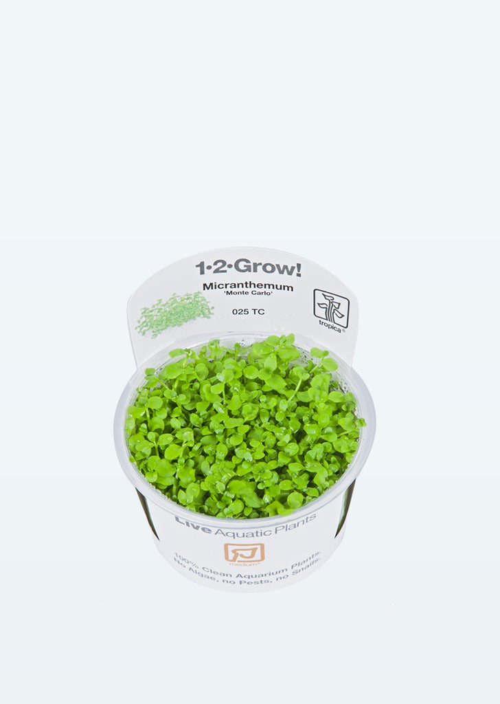 1-2-Grow! Micranthemum 'Monte Carlo' plant from Tropica products online in Dubai and Abu Dhabi UAE