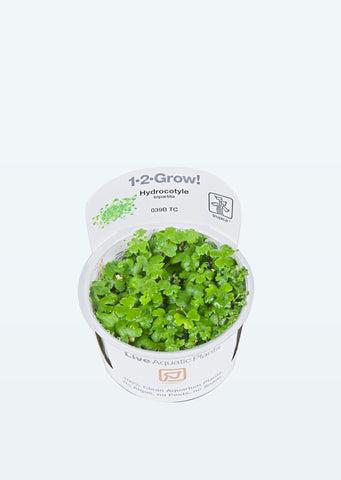 1-2-Grow! Hydrocotyle tripartita