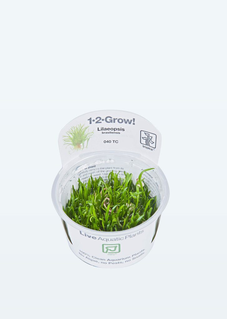 1-2-Grow! Lilaeopsis brasiliensis plant from Tropica products online in Dubai and Abu Dhabi UAE