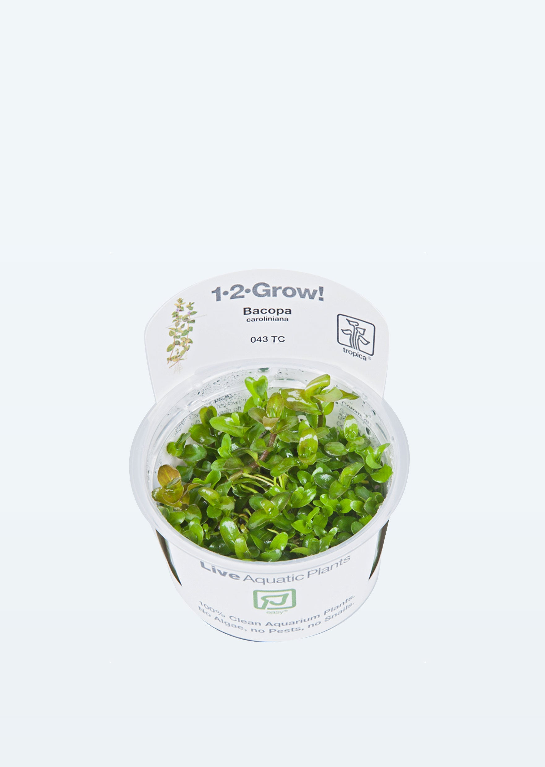 1-2-Grow! Bacopa caroliniana