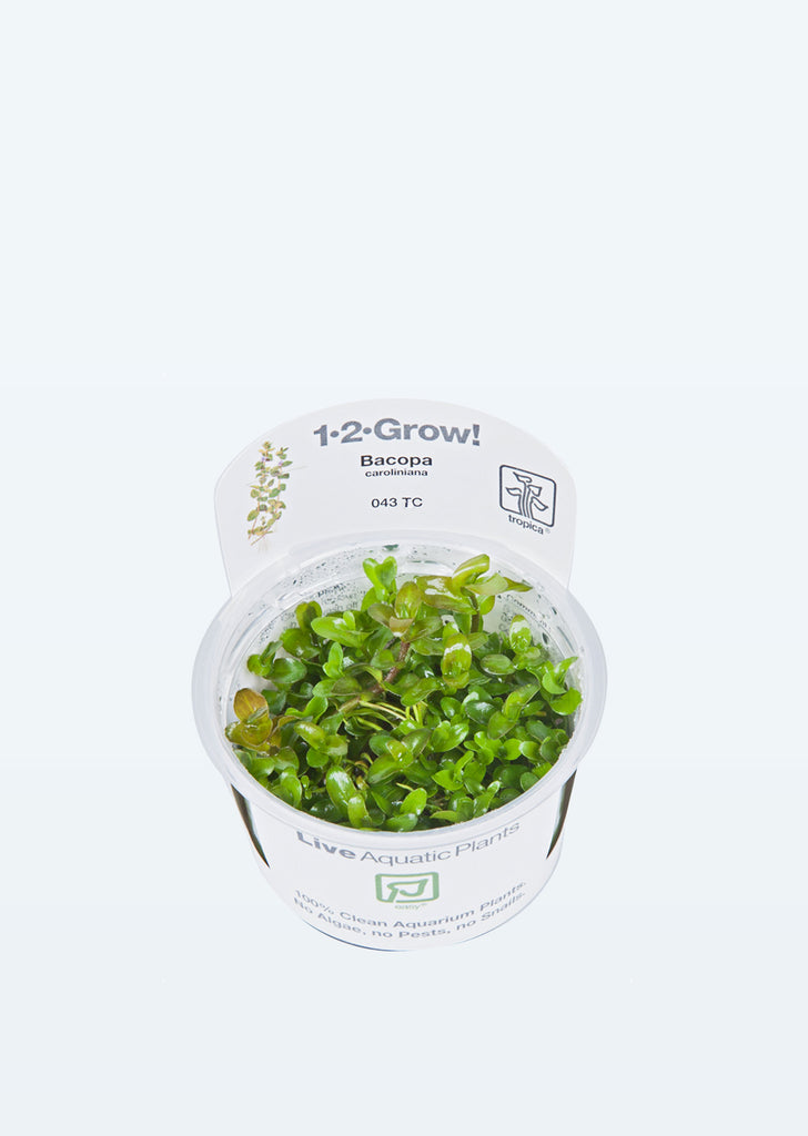 1-2-Grow! Bacopa caroliniana plant from Tropica products online in Dubai and Abu Dhabi UAE