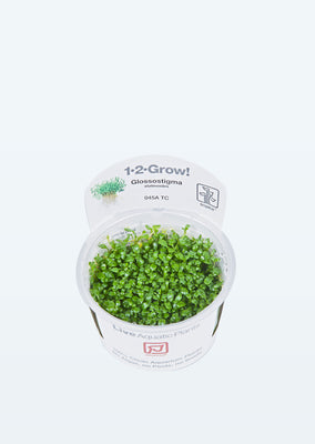 1-2-Grow! Glossostigma elatinoides plant from Tropica products online in Dubai and Abu Dhabi UAE