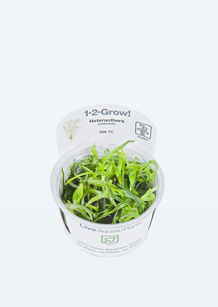 1-2-Grow! Heteranthera zosterifolia plant from Tropica products online in Dubai and Abu Dhabi UAE