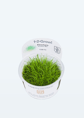 1-2-Grow! Eleocharis acicularis 'Mini' plant from Tropica products online in Dubai and Abu Dhabi UAE