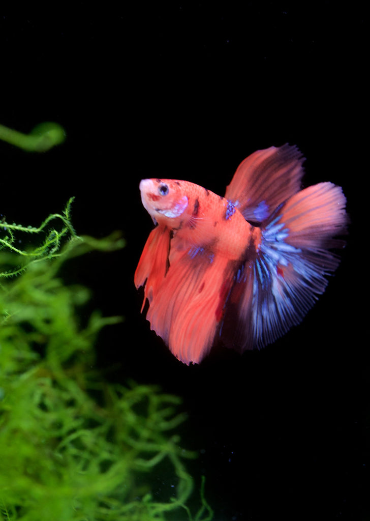 Best Aquarium shop in Dubai