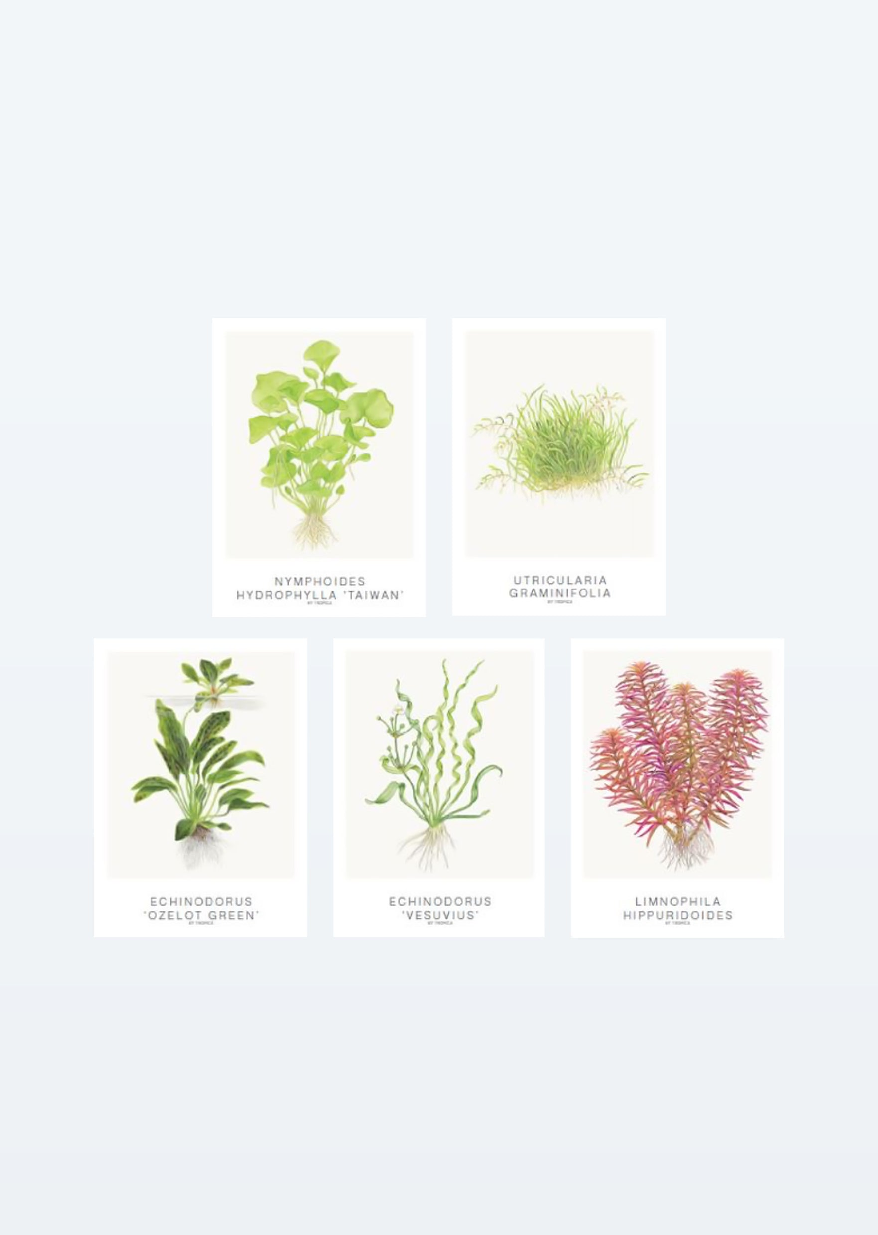 Tropica Art: Cards 13x18cm (set of 5)