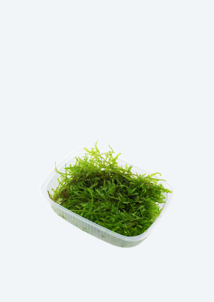 Best aquarium plants in UAE