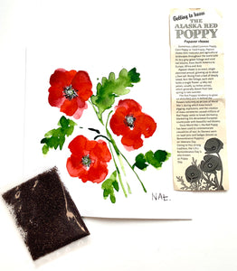 Red Poppies- Art Print and Seeds