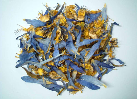 Blue Lotus Flower - Dragon Herbarium