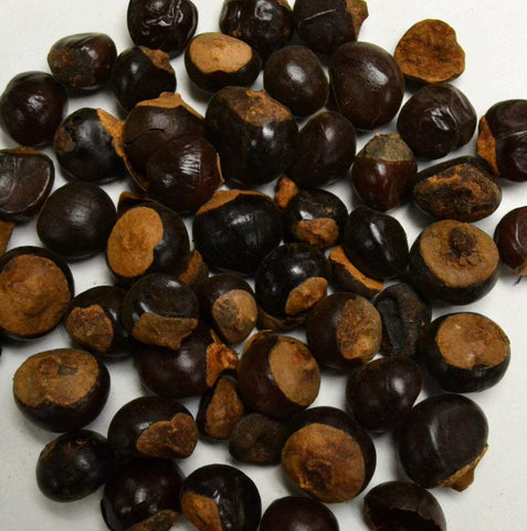 Guarana Seed - Dragon Herbarium