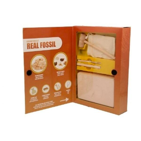 Fossil Dig Kit Keycraft General at Little Earth Nest Eco Shop