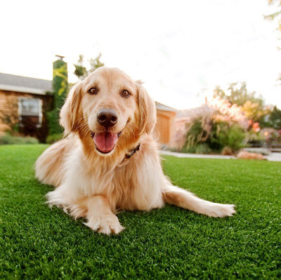 Pet Friendly Natural Grass