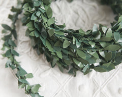 boxwood ribbon