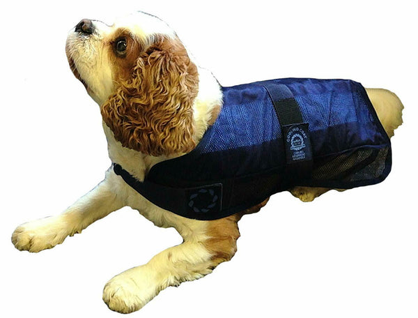 Animate Pet Dog /Cat Cooling Coat Jacket Water Activated Temperature Cool + Bag