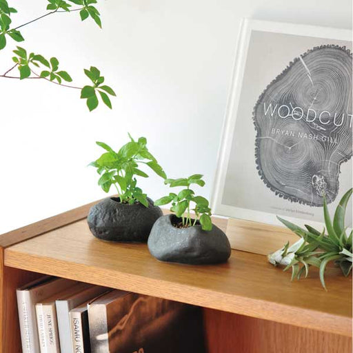 Plants Rock - Basil noted*