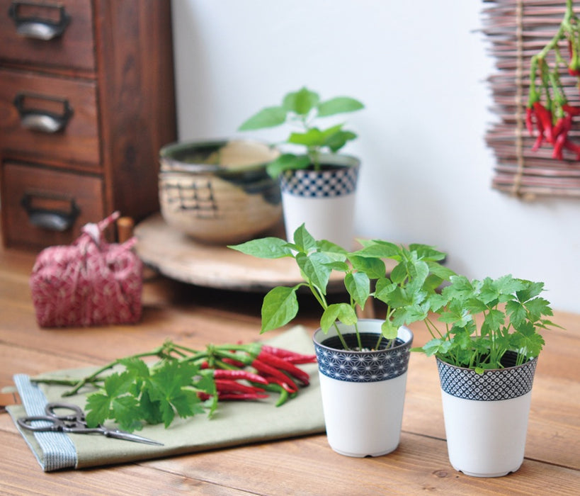 Yakumi - Japanese Spice (Hawk Claw Pepper, Mitsuba, Shiso) Plants Kit - Urban Treehouse