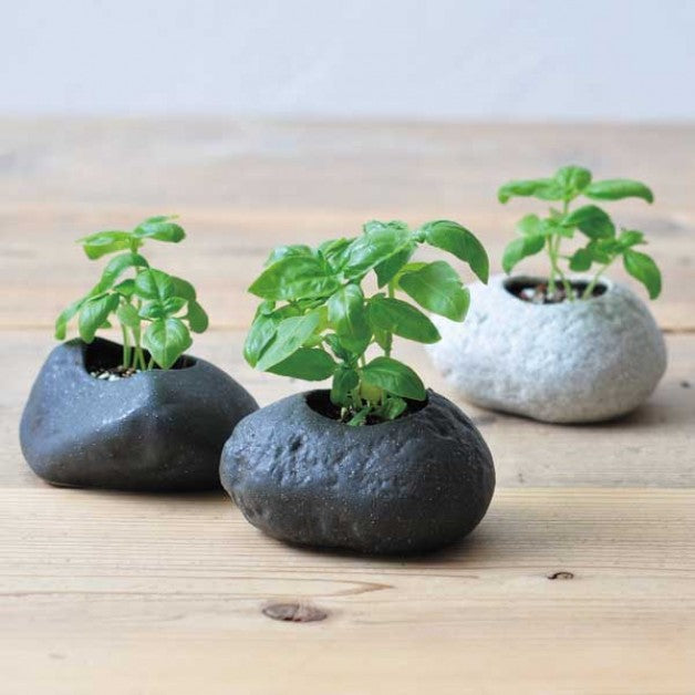 Plants Rock - Basil noted* - Urban Treehouse