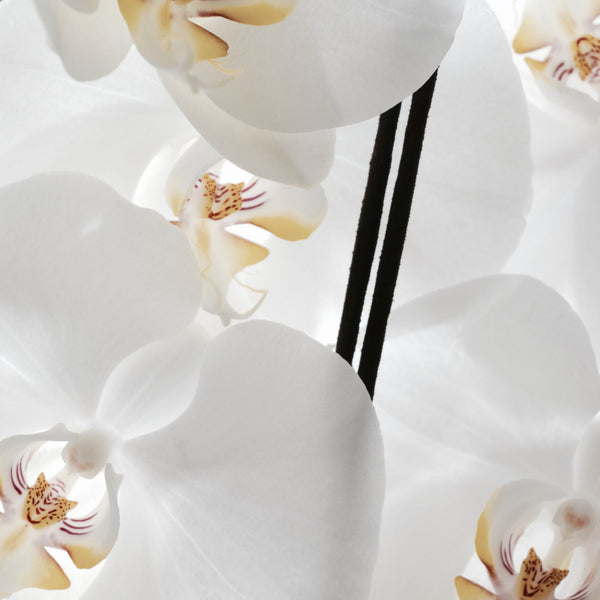 White Orchid Pure Incense