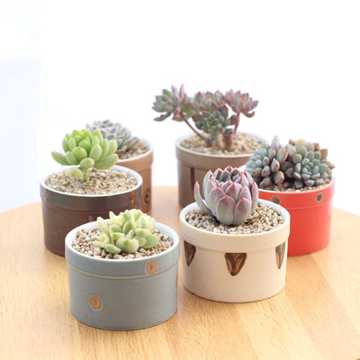 Set of 6 Japanese Transmutation Glazed Ceramic Flower Plant Pots