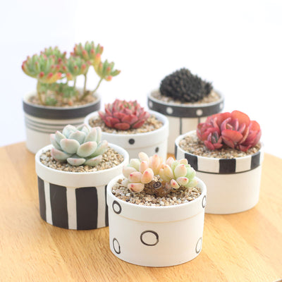Set of 6 Black Succulent Plant Pots