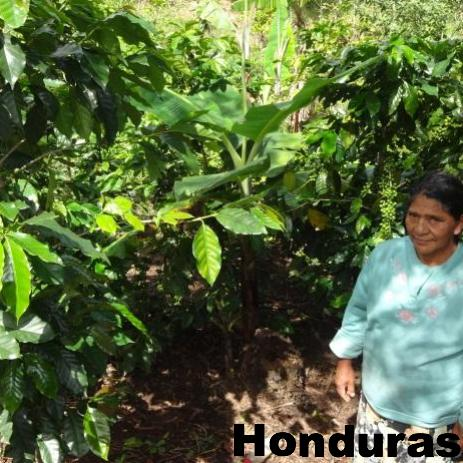 HONDURAS FTO SINGLE ORIGIN 12 OZ.