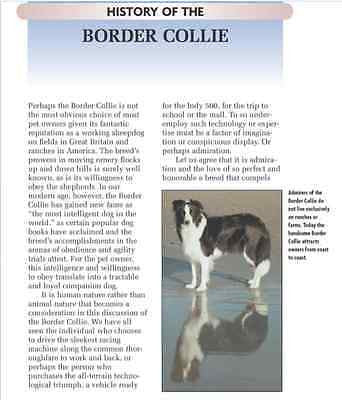 Border Collie:   Stephen Sussam  - New Kennel Club  Hardcover