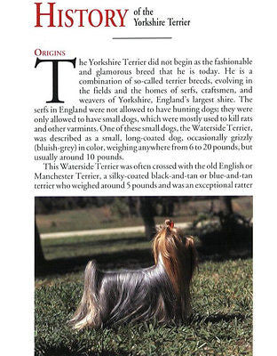 Owners Guide To Yorkshire Terriers : Janet  Jackson - New Hardcover @