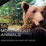 NPR Driveway Moments More about Animals :  Stories That Won't Let You Go : New @