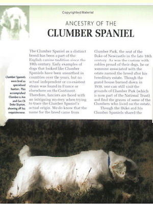 The Clumber Spaniel: Ricky Blackman - New Hardcover