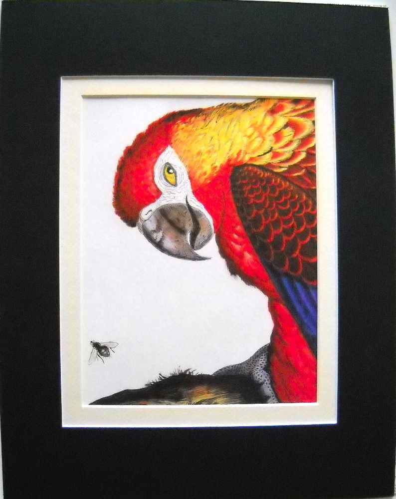 Walton Ford Illustration #31 Double Matted, Ready to Frame: PARROT