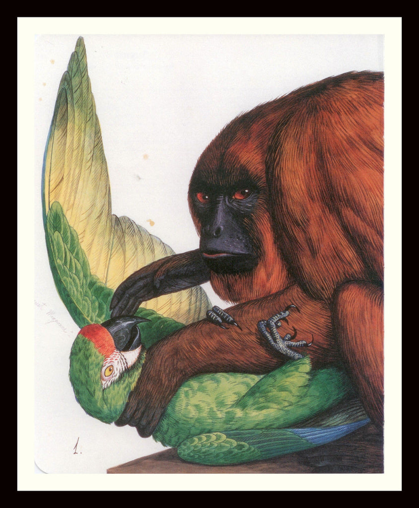 Walton Ford Illustration #51 Double Matted, Ready to Frame: Red Howler Monkey