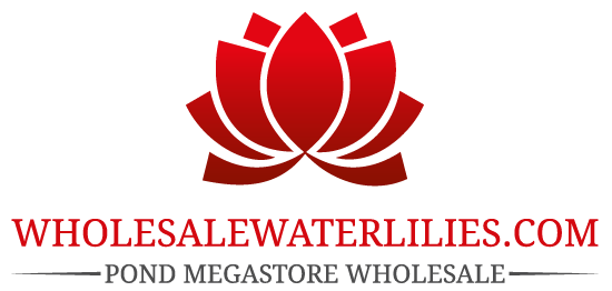Pond Megastore Wholesale Waterlilies Dept
