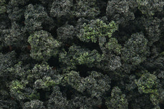 Bushes Clump-Foliage Forest Blend