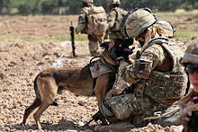Picture of army dog with owner in cammo - ThePetVault
