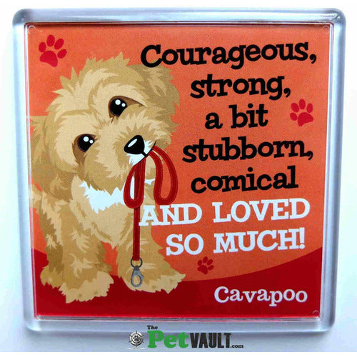 Cavapoo Gift Magnet - The Pet Vault