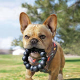 KONG Extreme Ring XL Dog Toy French Bulldog - The Pet Vault