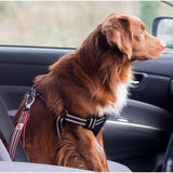 Long Paws Comfort Traffic Short Lead & Safety Belt - The Pet Vault