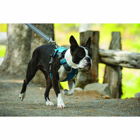 ruffwear front range harness 2016 padded dog front harness. Black Bedroom Furniture Sets. Home Design Ideas