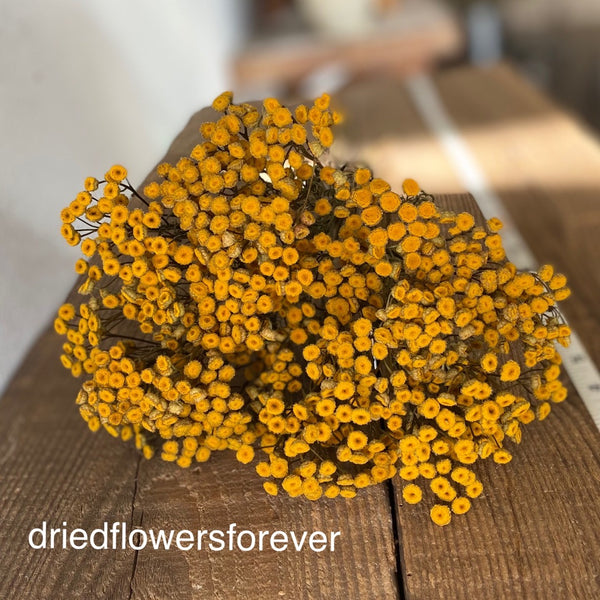 Dried yellow Tansy flowers herbs
