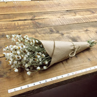 Dried Flowers - White Ammobium Bundle - Winged Everlasting - DIY