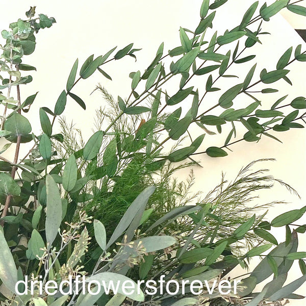 Bundle eucalyptus silver dollar spiral tree fern willow seeded parvifolia preserved long lasting