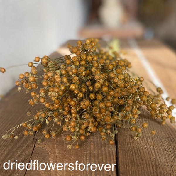 golden tan flax dried flowers