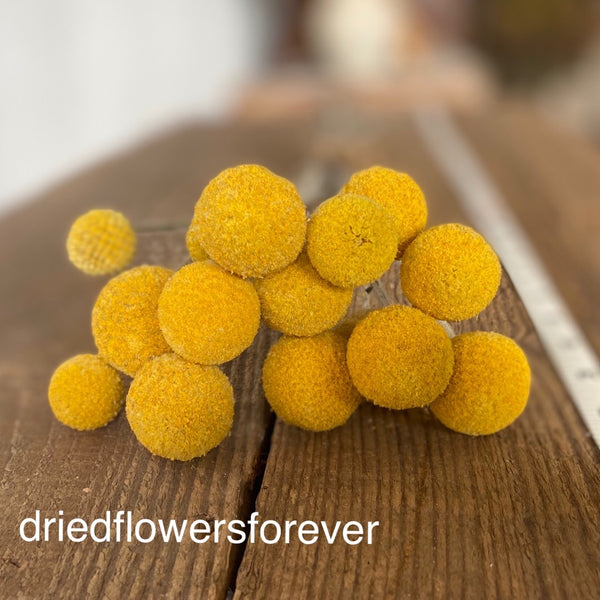 Yellow dried craspedia billy balls flowers
