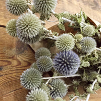 Dried Flowers - Gray Blue Globe Thistle Bundle - Echinops - DIY