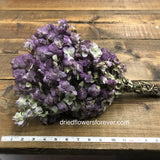 Dried Flowers - Kent Beauty Oregano Bundle - DIY